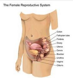 у гинекологов фото